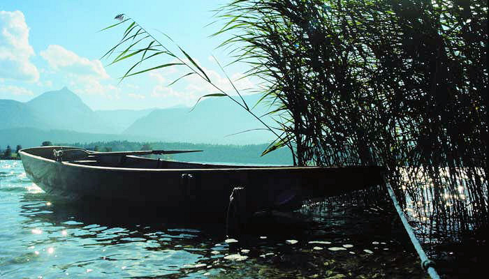 A boat in the reeds