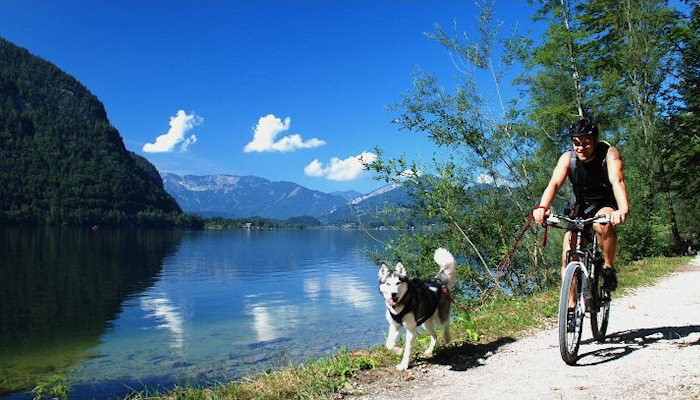 Salzkammergut - Dachstein-West, Biking paths